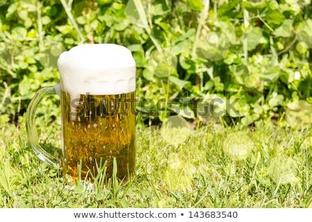 ストックフォト: マグ · ビール · 緑の草 · コピースペース · ガラス · アルコール