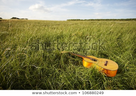 Stock photo: Wooden guitar lying in grassy field