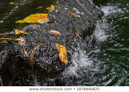 rocks in crystal clear water stock photo © jkraft5