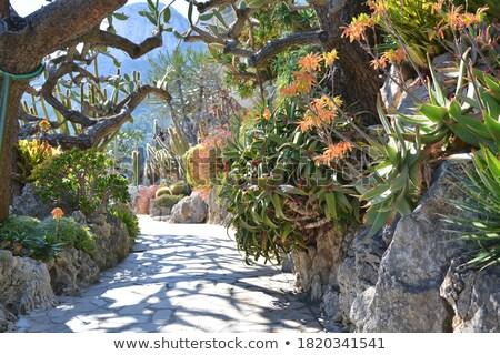 ogród · Monaco · kwiat · drzewo · charakter - zdjęcia stock © Coffeechocolates