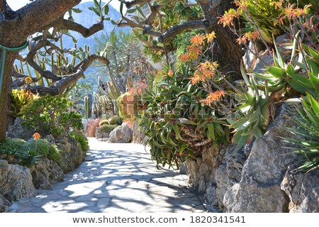 Jardim Mônaco flor árvore natureza Foto stock © Coffeechocolates