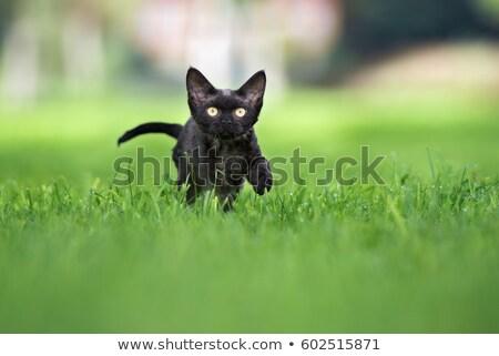 zwarte · ogen · haren · dieren · grappig · witte - stockfoto © EwaStudio