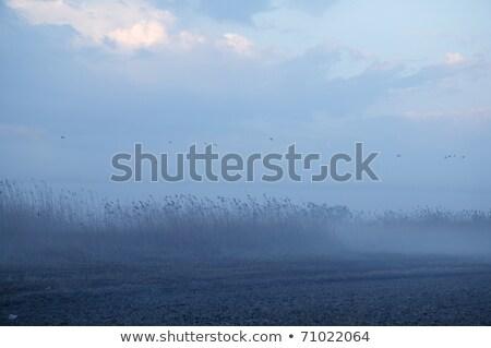 Foggy moor landscape dark blue gray with canes  birds Stock photo © lunamarina