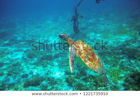 ancla · barcos · horizonte · playa · agua · paisaje - foto stock © lunamarina