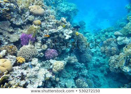Large sea sponge underwater on a coral reef Stock photo © jrstock