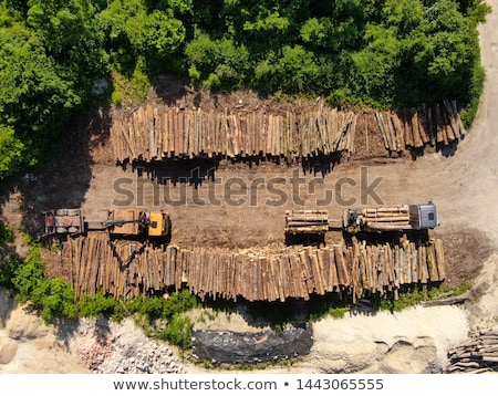 Stock photo: Large Stack of Timber Logs
