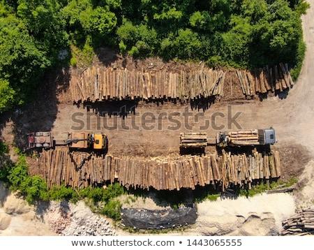 Large Stack of Timber Logs stock photo © tainasohlman