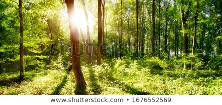 green spring forest  Stock photo © jonnysek