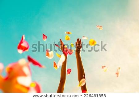 バラの花びら 手 花 結婚式 女性 白 ストックフォト © amok