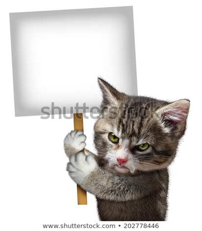 Stock photo: Angry Cat Holding Sign