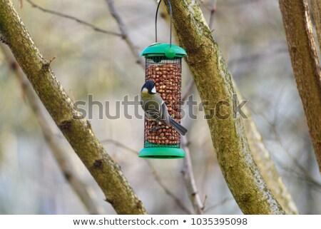 おっぱい 食べ ピーナッツ ツリー 森林 ストックフォト © ivonnewierink