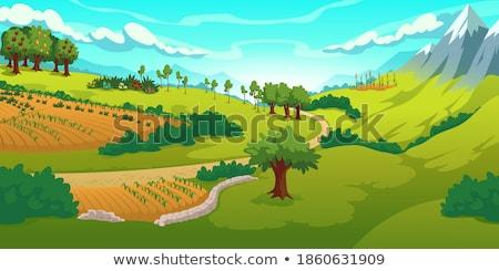 halszem · Írország · vidék · tájkép · eső · mező - stock fotó © morrbyte
