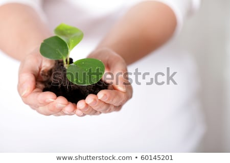 Isolated shot of a fresh shoot, growing from a small pile of earth held in hands. Stock photo © deandrobot