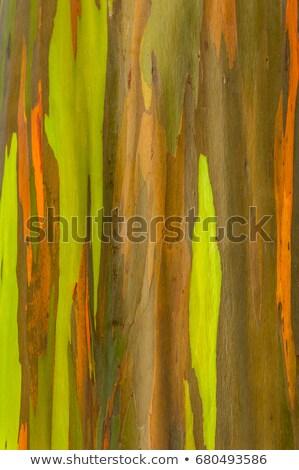 Détail coloré écorce Rainbow arbre Photo stock © backyardproductions
