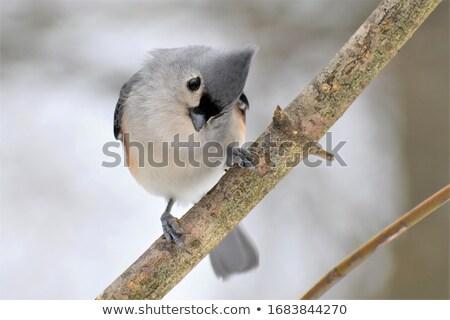Zwarte vogel oranje leven wildlife grijs Stockfoto © njnightsky