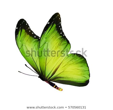 Vert papillon feuille verte nature été Photo stock © Relu1907