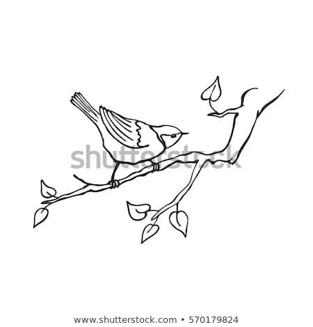воробей сидят филиала дерево Сток-фото © manfredxy