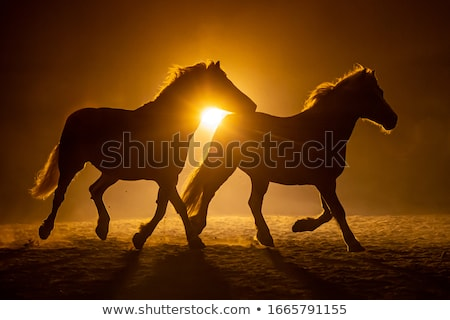 Stok fotoğraf: Horse Silhouette At Sunset