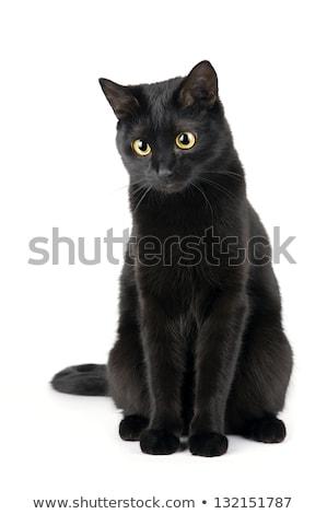 Cute mullido gato negro aislado blanco feliz Foto stock © vlad_star