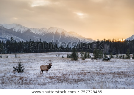 Montanhas inverno Canadá paisagem neve beleza Foto stock © pictureguy