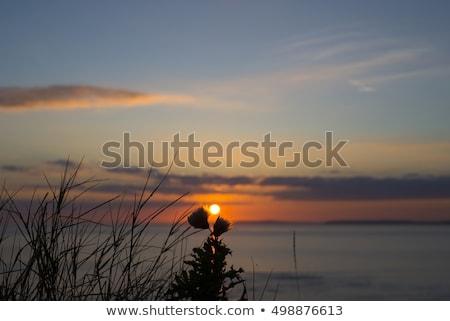 日没 ループ 頭 美しい オレンジ ストックフォト © morrbyte