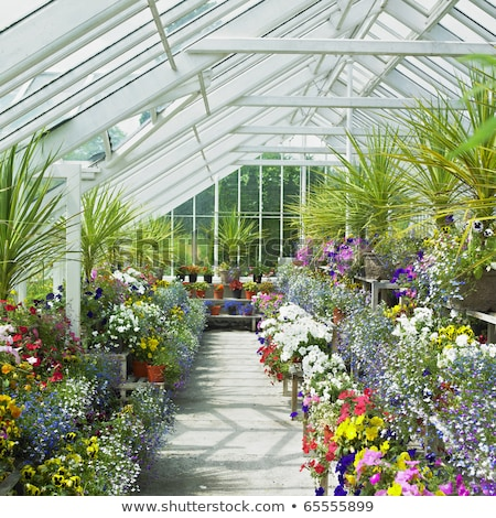 estufa · castelo · jardins · Irlanda · flores · plantas - foto stock © phbcz