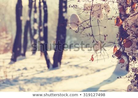 winter · bos · landschap · panorama · panoramisch · sneeuwval - stockfoto © meinzahn
