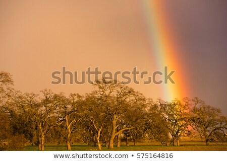 Dramatic Rainbow California Valley Landscape Rain Falling Stock photo © cboswell