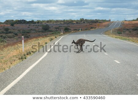 Kangoeroe weg illustratie woestijn teken grappig Stockfoto © adrenalina