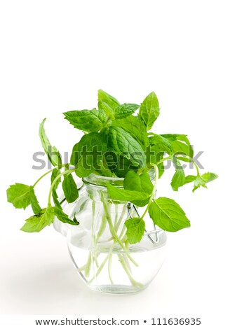 Fresh bright, fragrant bunches of mint . Mint leaves, peppermint closeup. Stock photo © mcherevan