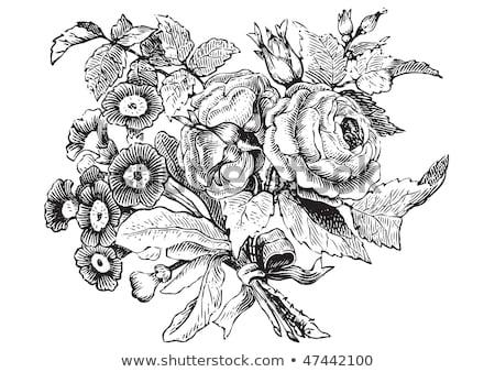 Rose Flower Engraved Vintage Woodcut Etching Stock photo © Krisdog