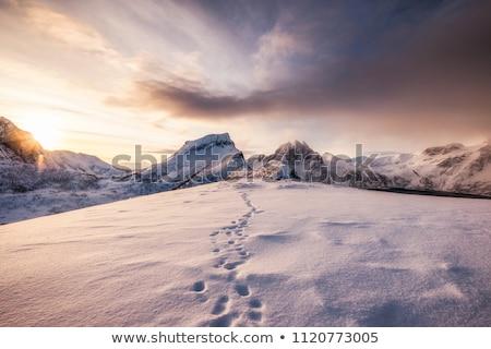Voetafdrukken sneeuw abstract winter ijs voet Stockfoto © stevanovicigor