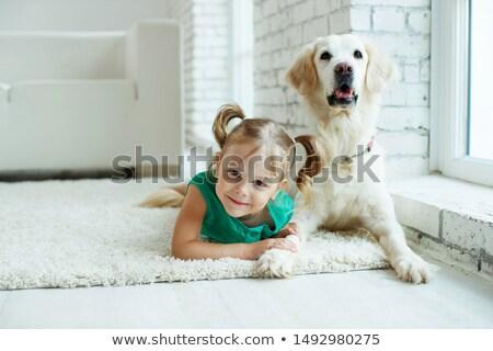 Köpek labrador retriever siyah saç portre Stok fotoğraf © AvHeertum