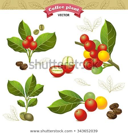 コーヒー豆 孤立した 背景 黒 朝食 ストックフォト © popaukropa