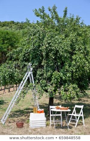 Picknicktafel ladder boomgaard wijn vruchten tabel Stockfoto © IS2