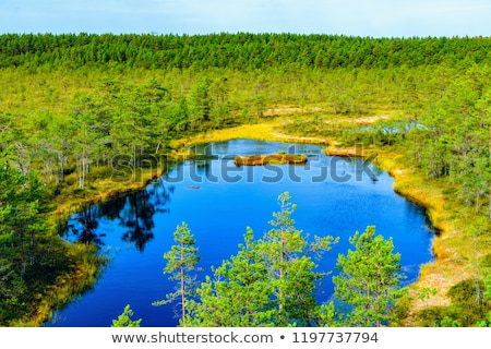 Lahemaa National Park in Estonia Stock photo © benkrut