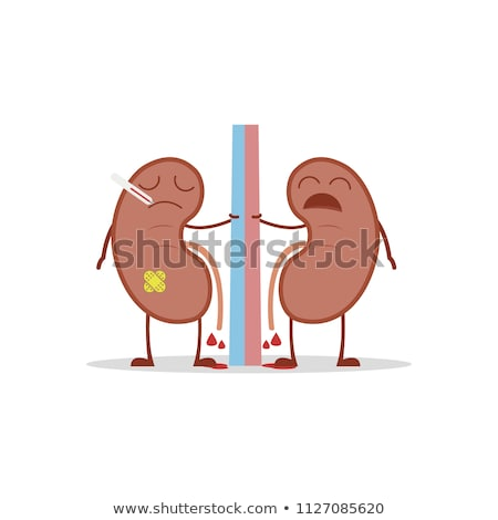 Kidneys in Relation to Other Organs stock photo © AlienCat