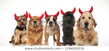 5 adorable puppies dressed as devils for halloween stock photo © feedough