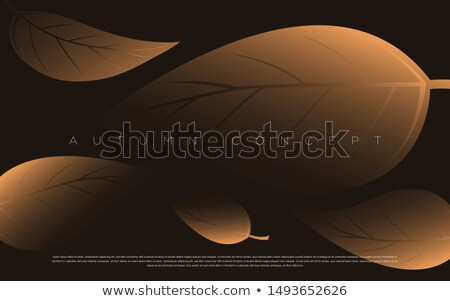 Exclusive Autumn Offer Posters Vector Illustration Stock photo © robuart