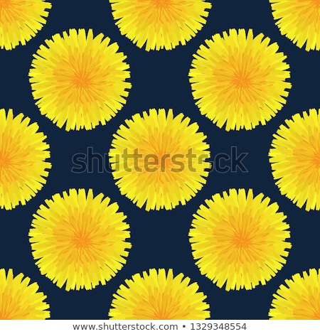 Floral seamless pattern. Hand drawn yellow head of dandelion officinale. Wildflower. Taraxacum Stock photo © user_10144511