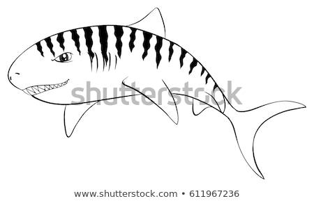állat tigris cápa illusztráció természet háttér Stock fotó © colematt