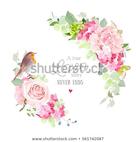 Rosa clavel flor marco ilustración boda Foto stock © bluering