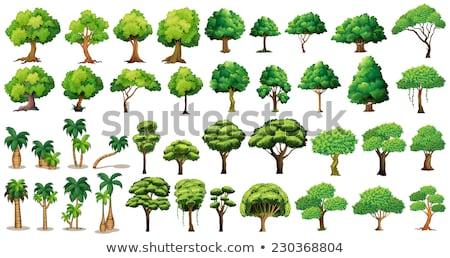 Vektör ayarlamak ağaçlar ağaç doğa bahçe Stok fotoğraf © olllikeballoon