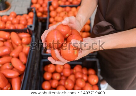 Commercial gardener showing tomatoes she grew  Foto d'archivio © Kzenon