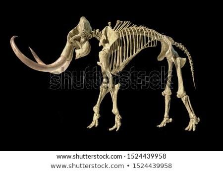 Esqueleto realista ilustração 3d vista lateral lado branco Foto stock © Pixelchaos