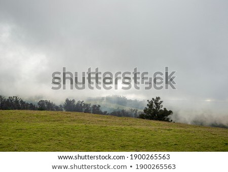 foggy landscape with tree on the mountains of Hawaii Stock photo © meinzahn