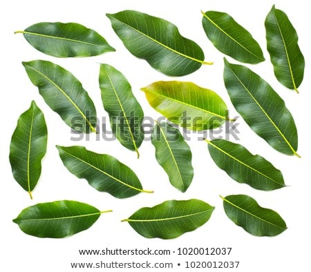 verde · orgânico · legumes · branco · abacate - foto stock © DenisMArt