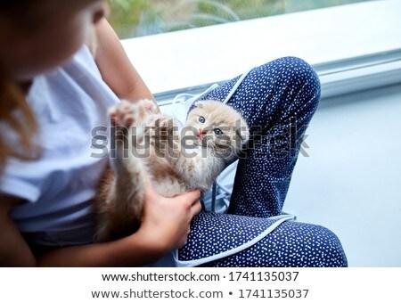 çocuk kız İngilizler küçük kedi yavrusu Stok fotoğraf © Illia