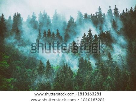 Manhã névoa nascer do sol montanha floresta sol Foto stock © taviphoto