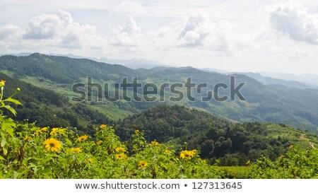 Landscape high mountain range at viewpoint Doi Mae U Ko Stock photo © Yongkiet